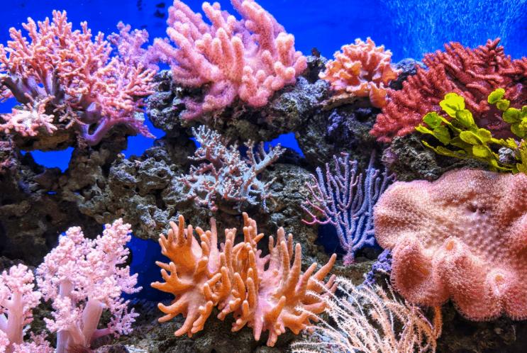coral reef ecosystem ocean